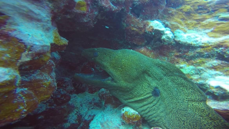 moray-eel.jpg