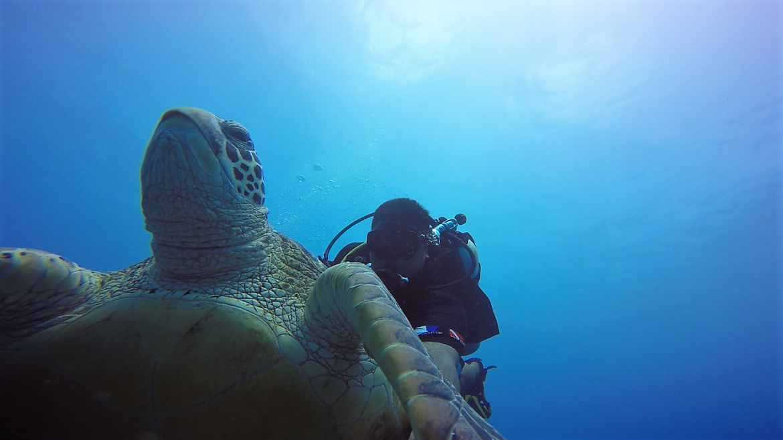 sun-pics-turtle-Onu2.png
