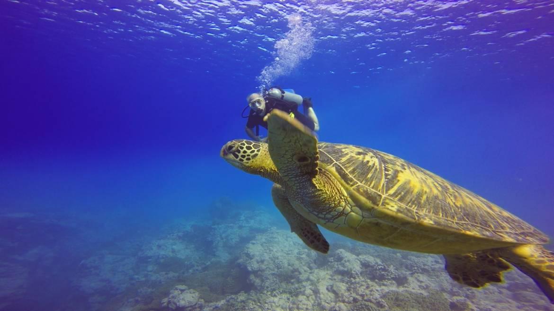 turtle-pic-3.jpg