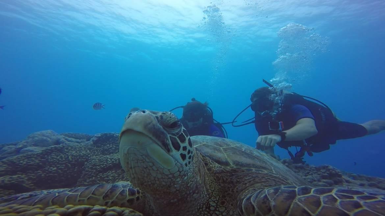 turtle-pics.jpg