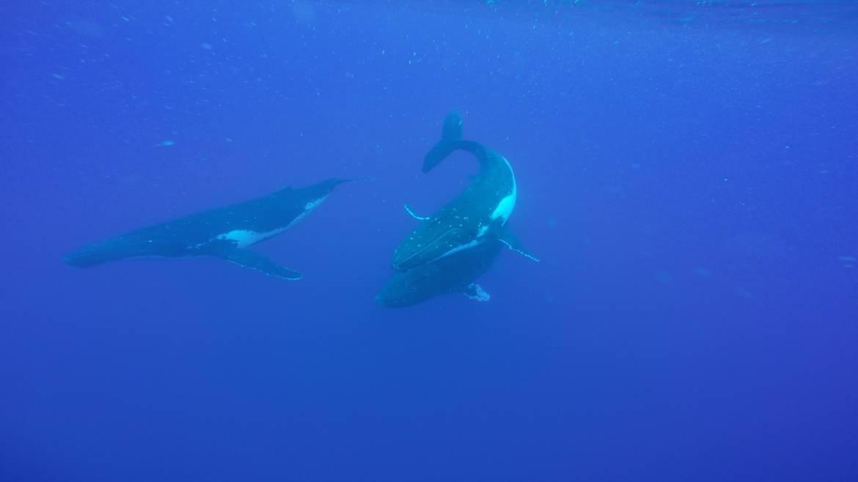 whale-pic3.jpg