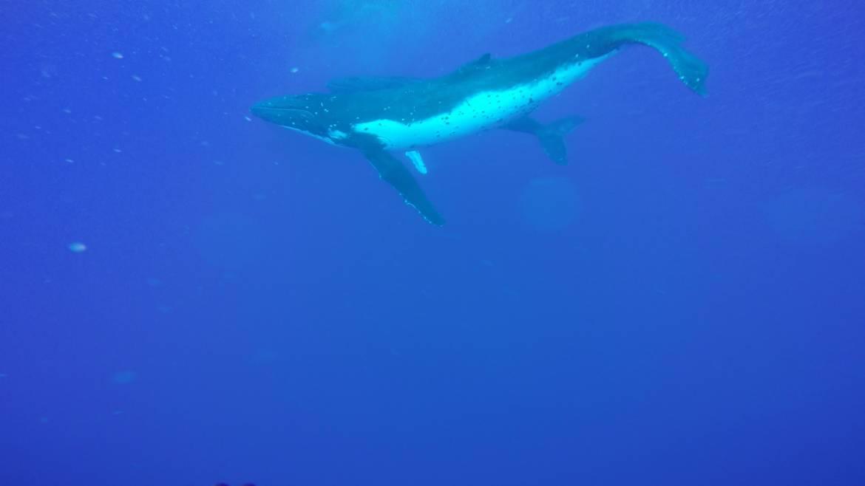 whale-pic5.jpg